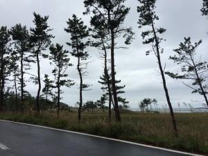 種差海岸3 ぽつん松原